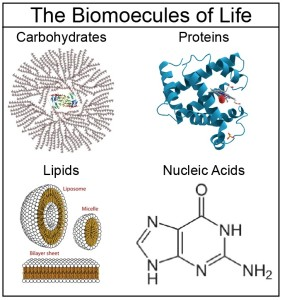 carbohydrates lipids protein and nucleic acid are inorganic compounds