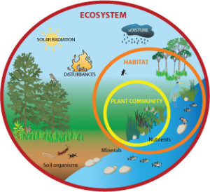 Ecosystem: Explanation with Ex...