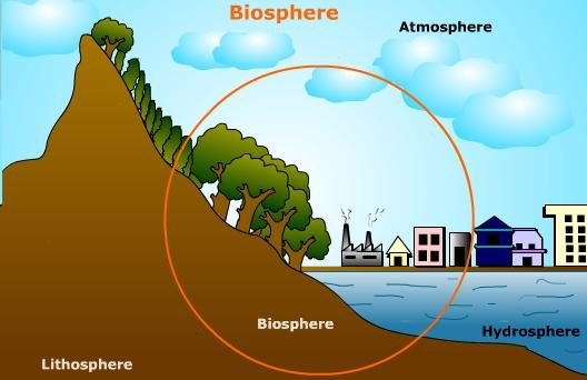 what is the biosphere made up of